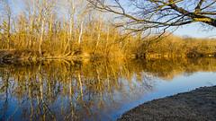 reflections2 (a7m2) Tags: austria vienna prater heustadlwasser donaukanal hauptallee lusthaus au wald wiese spazieren joggen laufen radfahren natur