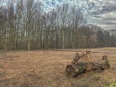 Wemmel,Beverbos  landscape#2 (foto_morgana) Tags: arbres aurorahdr2019 belgië belgique belgium beverbos bomen boomstronk bos bois clouds eyelevelview iphonexsmax landscape landschap nature naturereserve natuur natuurreservaat nuages on1photoraw2019 outdoor reservanatural réservenaturelle sky treetrunk trees vlaamsbrabant vzwnatuurpunt wemmel
