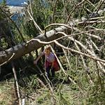 2019-03-29 03-31 Südtirol-Trentino 047 Caldonazzo-Lochere, Pizzo di Levico thumbnail