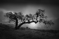 The Hanging Tree (StefanB) Tags: 2018 california em5 outdoor tree treescape almadenquicksilver sanjose hiking 1235mm geotag usa