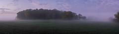 Morning mood on Fehmarn (Pascal Riemann) Tags: deutschland ostsee stimmung panoramafotografie wald landschaft fehmarn natur morgenstimmung balticsea germany landscape nature outdoor vogelfluglinie forest mood morningmood
