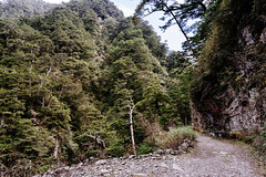 (li-penny) Tags: sonyilce7m2 taiwan sonya7ii nantou hehuanriverhikingtrail 台灣 合歡溪步道 zeissbatis25mmf2 南投