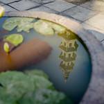 Wat Pho thumbnail
