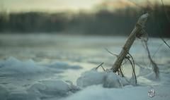 EOS_0119-1186 (DAN PHOTOGRAFIX) Tags: canon eos 6d reflex rehel stmichel paysage hiver winter sun soleil cold froid tree arbre ecorce bark snow neige glace ice ciel sky nuage cloud river riviere eau water