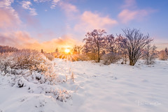 Hot 'n Cold (Ellen van den Doel) Tags: 2018 fagnes belgie zonsondergang winter wolk nature venen outdoor mont sunset landscape snow sneeuw hautes rigi hoge bomen landschap wolken cloud color ardennen tree natuur belgium weg weekend februari jalhay wallonie belgië be