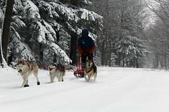 IMG_0032_AutoColor (LifeIsForEnjoying) Tags: snow mushing dog sledding dogs kaskae sitka nike