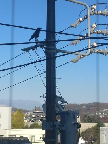 A crow over Crow Castle