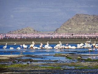 Africa Safari Lake Natron
