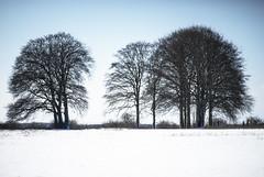 barely there (Redheadwondering) Tags: sonyα7ii salisburyplain wiltshire winter snow landscape trees minolta minolta100200mm baretrees copse
