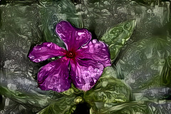 A Painted Purple Periwinkle (Carol (vanhookc)) Tags: periwinkle flower leaf plant garden macro art painterly purple pink green leaves digitalartwork digitaldrawing digitalrendering