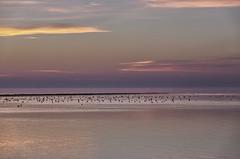 Evening calm (Zoom58.9) Tags: sky clouds sea river water birds waterbirds mood evening calm europe germany geestland himmel wolken meer fluss wasser vögel wasservögel stimmung abend abendstimmung europa deutschland sony sunset sonnenuntergang coast küste seascape seelandschaft