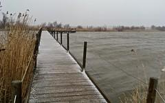 Tempête de neige au Scamandre 23 janvier 2019 - IMG_5818 (6franc6) Tags: réserve scamandre janvier 2019 occitanie languedoc gard 30 petitecamargue hiver 6franc6