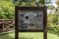 Botanical Garden / Ботанический сад (dmilokt) Tags: природа nature пейзаж landscape лес forest дерево tree парк park сад garden пальма palm dmilokt nikon d850