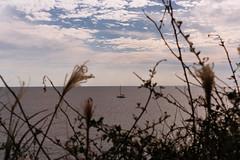 .no matter how rough the waves get. (Camila Guerreiro) Tags: film kodak portra 160 pentaxmesuper jusangjeolli southkorea camilaguerreiro analog sea grain jeju island