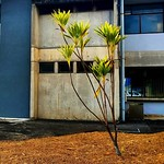 Esta semana: Tarde en Fundatec 200/365 #Proyecto365 - #tarde #afternoon #fundatec #urbanoscopio #costarica #fotodiaria #365project #photooftheday thumbnail