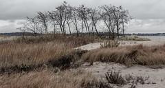 _DSC0062 (johnjmurphyiii) Tags: 06516 autumn beach clouds connecticut longislandsound originalnef sky tamron18400 usa westhartford westhaven johnjmurphyiii
