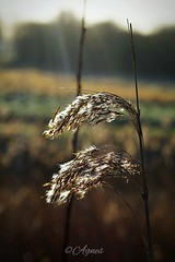 Met glans in de zon... #2019#assen#ttcircuit#grass#shine#gold#sun#morning#nature#naturephotography#photography#love#photooftheday#instadaily#wanderlust#walk#see#beauty#world#wanderer#outdoor#explore#outdoorphotography#simple#things#enjoy#sunrays#silence#n (agnes.postma.hoogeveen) Tags: love photooftheday sunrays wanderlust loveit beauty naturephotography enjoy outdoorphotography simple sun gold see world wanderer grass things silence ttcircuit explore nature assen naturelovers instadaily shine morning outdoor 2019 photography walk
