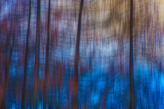 An Evening Walk in the Woods... (Ody on the mount) Tags: abstrakt ampezzo blau bäume dolomiten em5ii mzuiko40150 omd olympus pflanzen schneeschuhtour schneeschuhtour2019 südtirol urlaub wald abstract blue forest trees woods