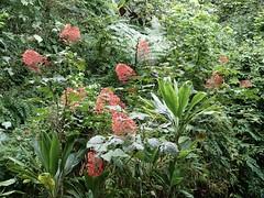Polynésie 2019 - Tahiti (Valerie Hukalo) Tags: polynésie tahiti archipeldelasociété valériehukalo hukalo polynésiefrançaise frenchpolynesia océanpacifique pacificocean océanie oceania flore flower fleur jardinbotanique