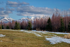 84/365 Welcome Spring (OhWowMan) Tags: 365the2019edition 3652019 day84365 25mar19 ohwowman nikon d3300 acdseepro9 spring anchorage alaska globalwarming mountains trees snow grass park clouds springtimeinalaska kfqdbayshorepark