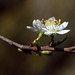Le printemps de près      1
