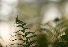 Fern (Eklandet) Tags: nature sverige sweden samsung sky scandinavia nordic countries naturephotography landscape fineartphotography landscapephotography naturelover 135 fern 135mm closeupphotography forest samyang rokinon f20
