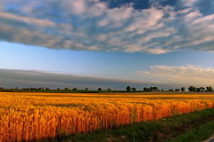 Sunset over the fields / Naplemente a mezők felett (Ibolya Mester) Tags: breath taking landscapes sunset clouds