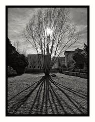 Sonnenzeichnung (jeilmer) Tags: sonne schatten bw noiretblanc blackwhite blackandwithe strauch gegenlicht austria steiermark styria bruckandermur tree trees shadow