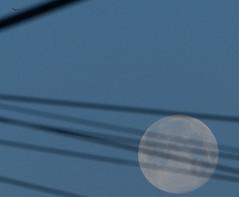 Moonset 20190321 (Pussreboots) Tags: 2019 hayward moonset morning saddledrive supermoon worm