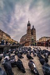 Krakow old town (Vagelis Pikoulas) Tags: krakow poland europe church travel holidays 2018 canon 6d city cityscape urban birds sky architecture tokina 1628mm landscape november autumn