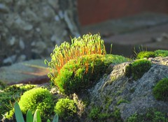 And there is light (Deida 1) Tags: moss stones shadow sun garden january uk staffordshire plant