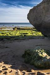 Behind the shadow (José Carrasco) Tags: sony sonya6000 sigma30mm sonyalpha6000 sonyilce6000 landscape paisaje portugal nature naturaleza wild shore sea mar ocean oceano costa algas