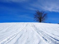 magányosan / standing alone (debreczeniemoke) Tags: tél winter hó snow túra hiking erdő forest fa tree hegy mountain gutin gutinhegység gutinmountains hómező snowfield ég sky olympusem5