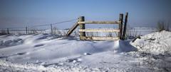 a homemade gate (Redheadwondering) Tags: sonyf1450mmlens sonyα7ii salisburyplain wiltshire winter snow snowday landscape gate fence