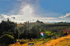 Tota, Boyacá (Stefania Avila) Tags: campo rural sun sunshine clouds sky cows naturaleza nature landscape grass colombia boyaca