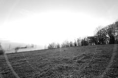 Sunnyfog (MikeSolfrank) Tags: none herbst autumn nebel mist light lichtstimmung tree bäume berg bayern bavaria outside nature art sky winter