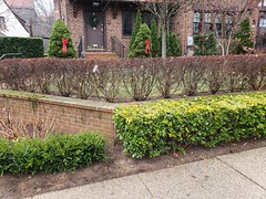 Low Wall (Joe Shlabotnik) Tags: foresthills foresthillsgardens queens cameraphone december2018 galaxys9 2018