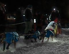 _ROS3445-Edit.jpg (Roshine Photography) Tags: dogs yukonquest dawson winter dogyard 36hourrestart huskies environmental yukonterritory snow dawsoncity yukon canada ca