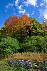 composition (jean-marc losey) Tags: canada québec montréal parc montroyal composition automne autumn tree arbre randonnée d700
