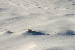 Kolm kühmu (Jaan Keinaste) Tags: pentax k3 pentaxk3 eesti estonia loodus nature talv winter lumi snow