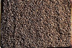 DSC_9459-61 (jjldickinson) Tags: nikond3300 107d3300 nikon1855mmf3556gvriiafsdxnikkor promaster52mmdigitalhdprotectionfilter coffee coffeebean roasting timor longbeach wrigley