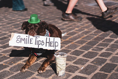 (seantigris) Tags: portland oregon saturday market portrait photography fashion dog cute puppy doggy saint patricks day