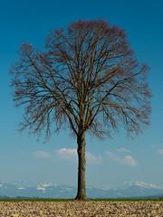 L'arbre, en attente du printemps (christian.rey) Tags: arbre tree hiver paysage landscape sony a7r2 a7rii 24105 broye fribourg suisse switzerland