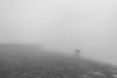 foggy day at the beach (ro_ha_becker) Tags: analogue film leicastandardconvleicaii leitzsummaron2835mmltm ilfordhp5 meinfilmlab schwarzweiss zwartwit biancoenero blancetnoir blackandwhite blancoynegro fog mist nebel strand beach