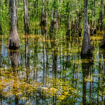 The Swamp thumbnail