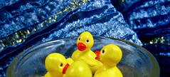 getting your ducks all in a .....circle (muffett68 ☺ heidi ☺) Tags: 119picturesin2019 duckies tiny candle alternative ansh bokeh