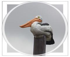 Standing Firm (Audrey A Jackson) Tags: canon60d westwardho devon bird post perched smartphotoeditor seaside beach feathers beak feet colour