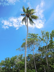Port Douglas, Queensland, AustraliaTNW