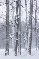 Clump of trees (Scottb211) Tags: gaylord gaylordmi northernmichigan upnorth winter polarvortex