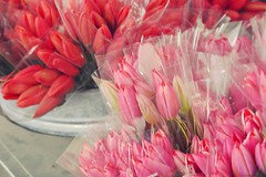 Beautiful Bouquets (MDawny72) Tags: skagitvalleytulipfestival tulips iloveflowers flowers budsandblooms blooms bouquet explorewashington mywashington washington fun beautiful beauty everydaybeauty 2017inphotos